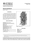 Illicium floridanum Introduction October, 1999 Fact Sheet FPS-277