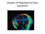 ch 19 gene expression in eukaryotes