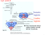 Somatic regions Limbic These functionally distinct