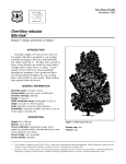 Grevillea robusta Silk-Oak Fact Sheet ST-285 1