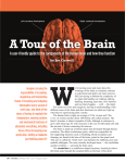 A Tour of the Brain - American Stroke Association