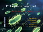 The Structure within Cytoplasm