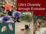 Life's Diversity through Evolution