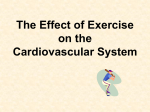 The Effect of Exercise cardio system