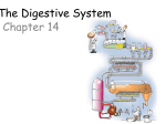 The Digestive System Chapter 14