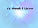 cell cycle and mitosis powerpoint 2015