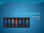 Our Body Systems