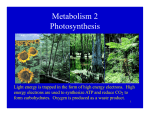 Metabolism 2 Photosynthesis