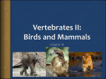 Vertebrates I: Fish, Amphibians, and Reptiles