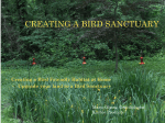CREATING A BIRD SANCTUARY