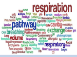 9.1-Respiration structures
