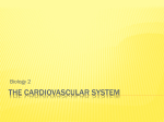 cardiovascular system ppt