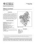 Hibiscus coccineus Introduction October, 1999 Fact Sheet FPS-253