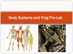Animal Systems and Frog Pre-Lab
