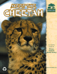 CHEETAH MEET THE An Activity Guide for
