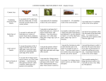 Content Rubric for students CCSS insect Student