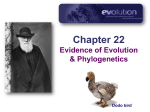 Ch22--Evidence for Evolution v2015