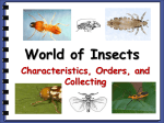 World of Insects - CoconinoHighSchool