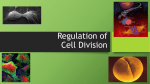 IB 2 Cell Regulation