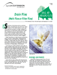 Drain Flies (Moth Flies or Filter Flies)