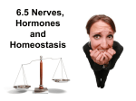 6.5 Nerves, Hormones and Homeostasis