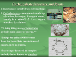 I. II. and III. Carbohydrates Structures and Plants