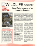 Feral Cats: Impacts of an Invasive Species