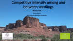 Competitive intensity among and between seedlings