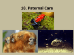 18 Parental Care and Nesting