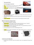 Mineral Composition of Igneous Rock
