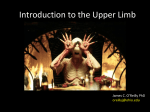 Introduction to the Upper Limb