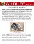 Ecological Impacts of Feral Cats