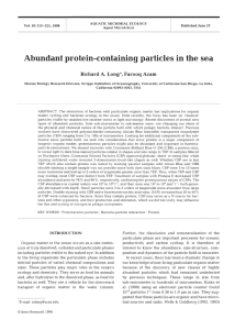 Abundant protein-containing particles in the sea
