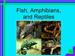 Powerpoint Review of Fish, Amphibians, and Reptiles