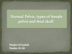 Normal Pelvis, types of female pelvis and fetal skull