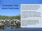 Freshwater Tidal Marsh Field Guide