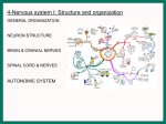 4-Nervous system I: Structure and organization