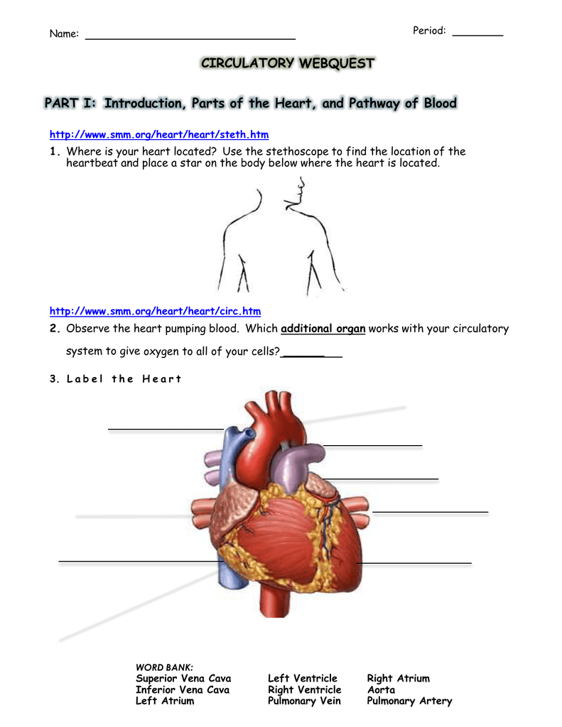 Circulatory System Web Quest