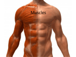 Week 5, Muscles, Feb 12, student version