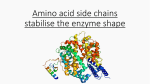 Amino acid side chains stabilise the enzyme shape Hydrogen bonds