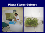 Lecture 2: Applications of Tissue Culture to Plant