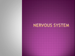 Nervous System - Wando High School