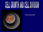 8 cell division
