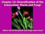 Chapter 11. Diversification of the Eukaryotes: Animals