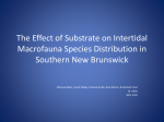 The Affect of Substrate on Intertidal Macrofauna Species Distribution