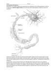 anatomy of a neuron worksheet