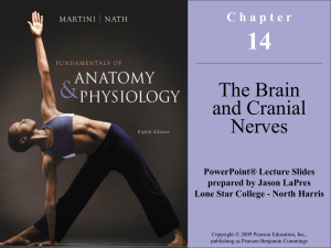 Chapter 14 - Brain and Spinal Cord