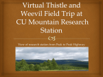virtual-field-trip-to-cu-mt-research-station