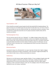 Vaccinations - Steamboat Veterinary Hospital