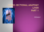 cross-sectional-anatomy-liver-part-1